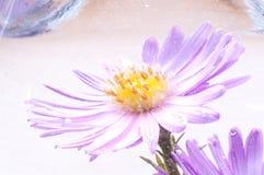 Lilac OnderwaterBloem Stock Afbeelding