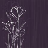 Lilac ontwerp met krokus Stock Foto