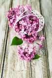 Lilac in openwork metal basket. On a wooden painted table Stock Photo