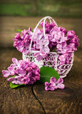 Lilac in openwork metal basket Royalty Free Stock Images