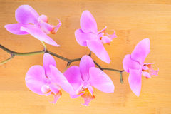 lilac  orchid on bamboo wooden  background Stock Images