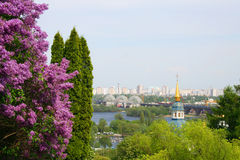 Lilac over the city landscape Royalty Free Stock Photography