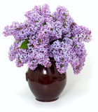Lilac over white Royalty Free Stock Photos