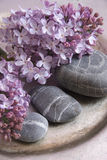 Lilac with pebbles. Decorative lilac with black pebbles Royalty Free Stock Image