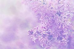Lilac on pink background. Digital image. Watercolor stylization. vector illustration