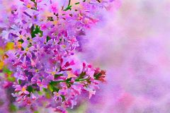 Lilac on a pink background. royalty free stock image