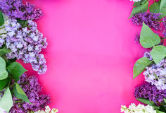 Lilac on pink background