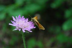 Lilac Posy Stock Photos