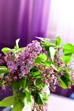 Lilac flower bouquet on purple background stock photos