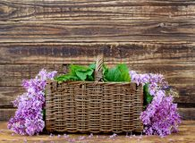 Lilac purple tree basket. Still life in the form of a large bouquet of purple lilac branches in a wicker rectangular basket mounted on a wooden table on the royalty free stock photos