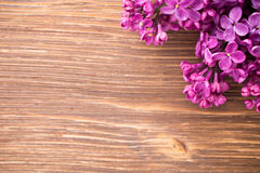 Lilac. Royalty Free Stock Photo