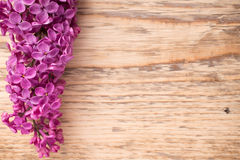 Lilac. Royalty Free Stock Photos