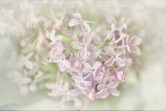 Lilac, romantic card. Stock Photo