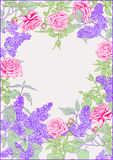 Lilac, Roses. Frame. Stock Photo