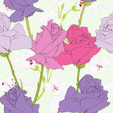 Lilac roses Royalty Free Stock Images