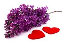 Lilac roxo e corações vermelhos Fotos de Stock Royalty Free