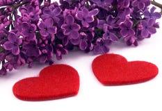 Lilac roxo e corações vermelhos Imagem de Stock Royalty Free