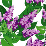 Lilac seamless Royalty Free Stock Photo