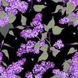 Lilac Seamless Pattern. Royalty Free Stock Images