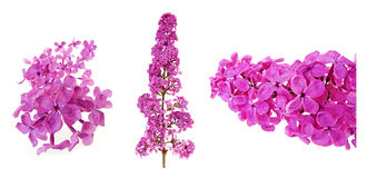 Lilac set Royalty Free Stock Photos