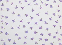 Lilac small flowers pattern on white background Royalty Free Stock Images