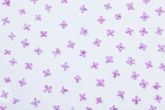 Lilac small flowers pattern on white background Stock Image