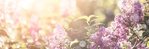 Lilac spring blossom Royalty Free Stock Photos