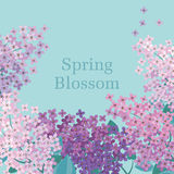 Lilac spring blossom vector illustration. Royalty Free Stock Photography