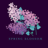 Lilac spring blossom vector illustration. Royalty Free Stock Photo