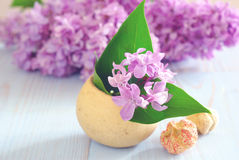 Lilac still life purple background Stock Photos