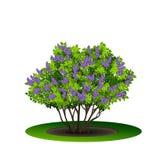 Lilac struik met groene bladeren en bloemen stock illustratie