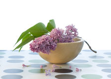Lilac (syringa) Royalty Free Stock Photo