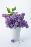 Lilac (Syringa vulgaris) Stock Photo