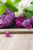 Lilac on table. Fresh lilac flowers on wooden table with copy space Royalty Free Stock Photography