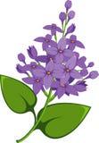 Lilac tak Royalty-vrije Stock Afbeeldingen