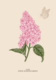 Lilac tak Bloemen achtergrond Stock Foto