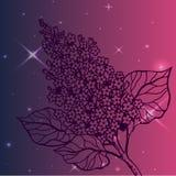 Lilac tak - gedetailleerde schets Royalty-vrije Stock Foto