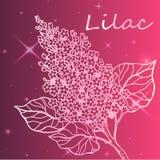 Lilac tak - gedetailleerde schets Stock Afbeelding