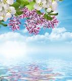 Lilac tak op een achtergrond van blauwe hemel met wolken Royalty-vrije Stock Foto