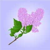 Lilac takje met bloemen en bladerenvector Stock Fotografie