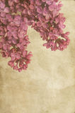 Lilac with texture Royalty Free Stock Images