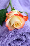 Lilac towel with yellow rose Stock Image