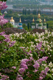 Lilac tree blossom in Kiev Stock Photography
