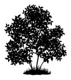 Lilac tree and grass, silhouette Stock Images