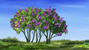 Lilac Tree in Spring Royalty Free Stock Image