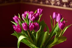 A lilac tulip bud. Macrophoto. Unopened lilac tulip bud close-up. Russia, Moscow, holiday. Photography in the interior Stock Photography
