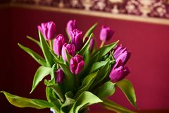 A lilac tulip bud. Macrophoto. Lilac tulips in a decorative vase stand on a table. Russia, Moscow, holiday, gift, mood, nature, flower, plant, bouquet, macro Royalty Free Stock Photo