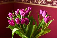 A lilac tulip bud. Macrophoto. Lilac tulips in a decorative vase stand on a table. Russia, Moscow, holiday, gift, mood, nature, flower, plant, bouquet, macro Stock Photography