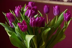 Lilac Tulips. Bud, petals, bouquet. Lilac tulips in a decorative vase stand on a table. Russia, Moscow, holiday, gift, mood, nature, flower, plant, bouquet Royalty Free Stock Photos