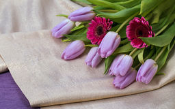 Lilac tulips and pink gerbera on a gold background Stock Photo